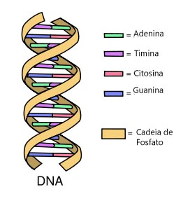 Aula on dna diagram labeled